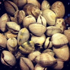 4 pounds of clams calls for clam chowder!